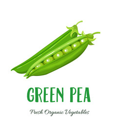 green pea vegetable vector image