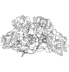 bouquet of peonies five large beautiful flowers vector image