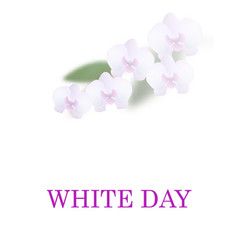 Greeting card white day beautiful orchid flowers vector