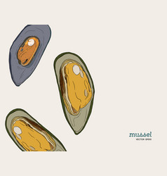 hand draw mussels vector image