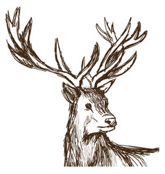 Hand drawn deer big antlers wildlife poster face vector