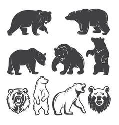 bears animals set vector image vector image