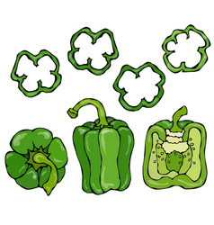 green bell peper set half of sweet paprika and vector image