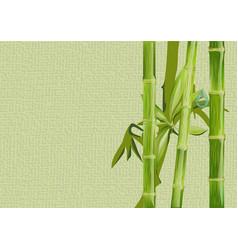 bamboo and drop vector image