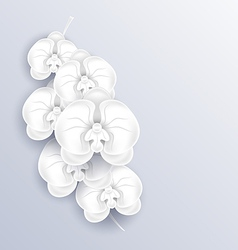 Brunch of beautiful orchids paper craft template vector