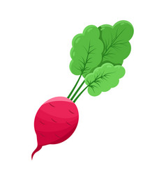 Juicy radish vegetable color vector