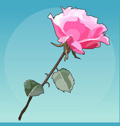 painted flower beautiful pink rose on blue vector image