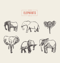 Set realistic elephants hand drawn sketch vector