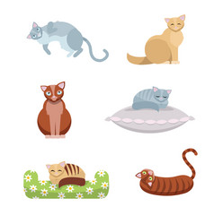 a set cute long-haired and short-haired cats vector image