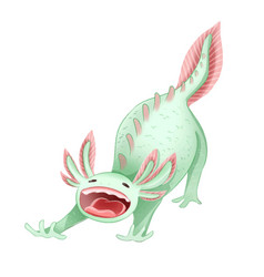 Cute axolotl ambystoma mexican isolated image vector