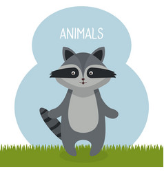 Cute raccoon in the field landscape character vector