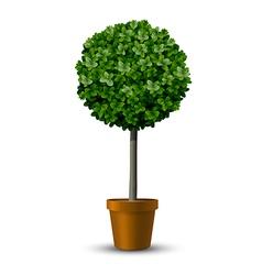Decorative trimming boxwood tree vector