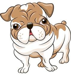 English bulldog vector