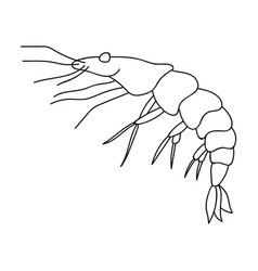 Shrimp icon in outline style isolated on white vector
