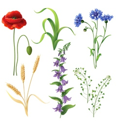 wildflowers set vector image
