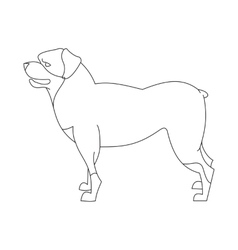 Rottweiler dog linear vector image vector image