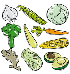 Set of vegetable garlic peas cabbage vector