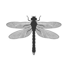 Silhouette of dragonfly vector