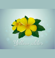 Yellow alder flower vector