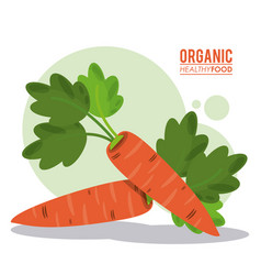 organic healthy food carrot harvest vector image
