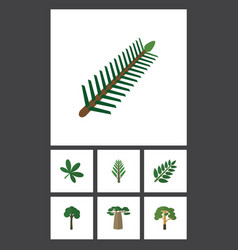 flat icon natural set of wood spruce leaves vector image