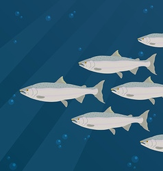 Group of salmon fish swimming vector