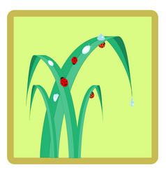 ladybug on grass in square card vector image
