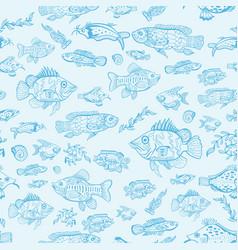 magic marine sea life sketch pattern vector image