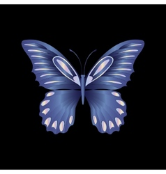 Pearl Lace butterfly on black background vector