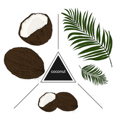 set of tropical fruits coconuts and leaves vector image