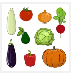 Set of Vegetable Isolated on White Background vector image