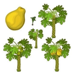 Planting and cultivation of yellow pear vector image vector image