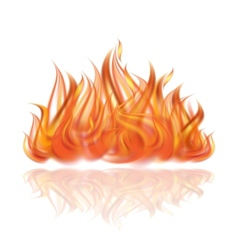 Fire on white background vector image vector image