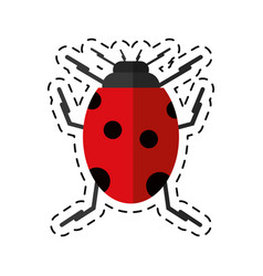 cartoon ladybug insect nature icon vector image