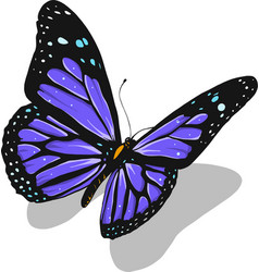 A beautiful colorful butterfly vector