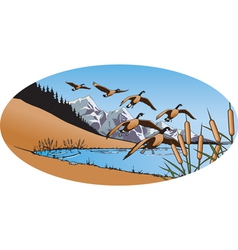 canada geese 2 vector image