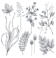 Hand drawn flowers and herbs set vector