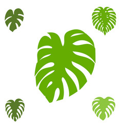 Monstera icon collection vector