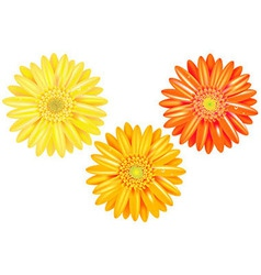 Yellow And Orange Gerbers vector image