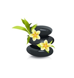 Beautiful Flowers and Stones vector image