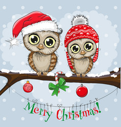 Greeting christmas card two owls vector