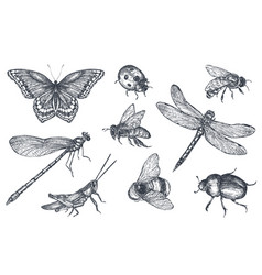 Insects sketch decorative set in sketch style vector