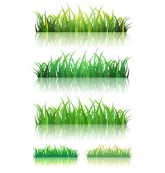 spring or summer green grass set vector image