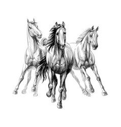 Three horses run gallop on white background hand vector