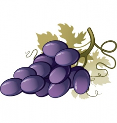 vineyard vector image
