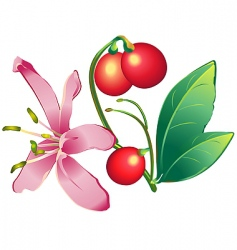 honeysuckle vector image vector image
