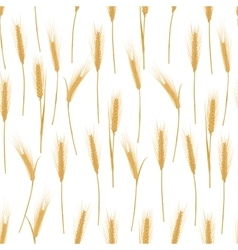 Ears of wheat on a white background seamless vector image