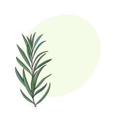 Beautiful elegant hand drawn melaleuca twig vector
