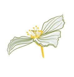 Jasmine flower white isolated vector