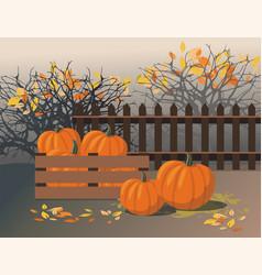 Thanksgiving - ripe pumpkins in harvest box vector